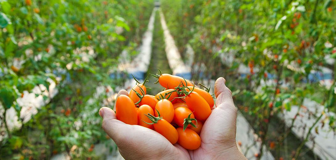 slide_agriculutre